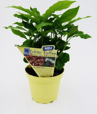 Dominik Gartenparadies Echter Kaffee, 2 Stück