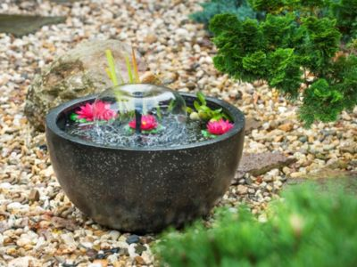 Miniteich Im Mortelkubel Garten Gartenforum De