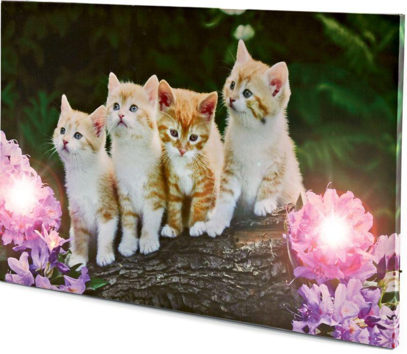 LED Wandbild - Katze