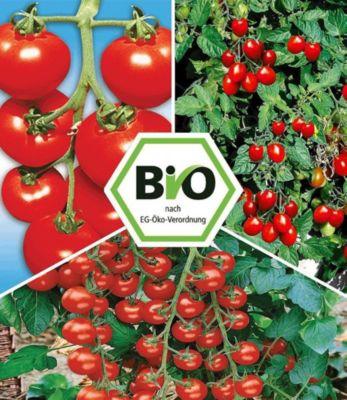 bio tomaten kollektion 6 pflanzen bio buschtomatne bio. Black Bedroom Furniture Sets. Home Design Ideas