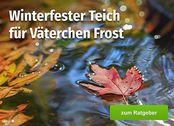 Winterfester Teich