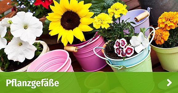 Pflanzen Online Kaufen Gartenxxl De