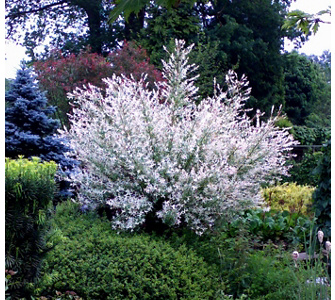 exotische pflanzen für garten und terrasse. - gartenxxl ratgeber, Garten und Bauen