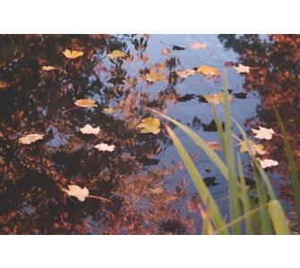 Teich schutz preisvergleiche erfahrungsberichte und for Teich schutz