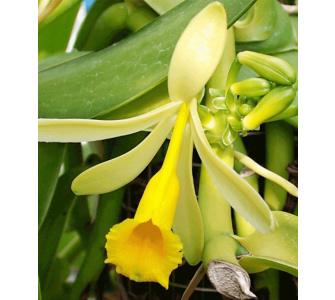 orchideen t pfe preisvergleiche erfahrungsberichte und. Black Bedroom Furniture Sets. Home Design Ideas