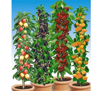 Säulenobst - Reiche Ernte Von Schlanken Bäumen - Gartenxxl Ratgeber Obstbaume Im Topf Sorten Anpflanzen