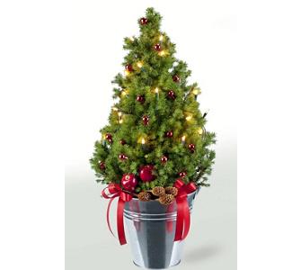 Der richtige weihnachtsbaum die qual der wahl gartenxxl ratgeber - Glycerin weihnachtsbaum ...