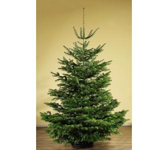 Weihnachtsbaum Brauchtum.Weihnachtstraditionen Und Brauchtum Gartenxxl Ratgeber