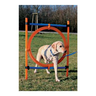 Dog - Agility - Ring