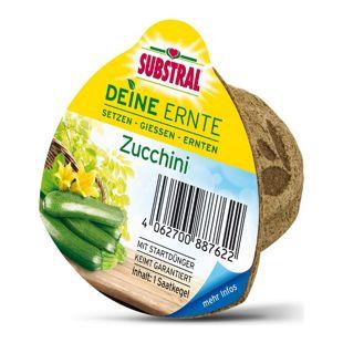 Substral Deine Ernte Saatkegel Zucchini