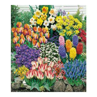140 Blumenzwiebeln Spar-Paket, 140 Zwiebeln im Mix mit Tulpen, Narzissen Hyazinthen, Anemonen, Zierlauch und mehr