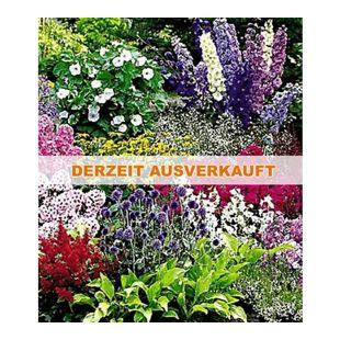Buntes Staudenbeet 'Multi-Colour', Staudengarten, Stauden-Sortiment 12 Pflanzen