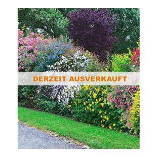 Sommer-Hecken-Kollektion, Blütenhecke, Blühhecke 5 Pflanzen Caryopteris, Hypericum, Deutzia strawberry field, Spirea und Weigeli