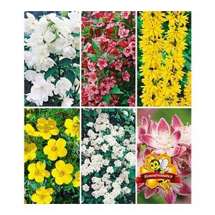 5 Meter Blüh-Hecken-Kollektion, Blütenhecke 6 Pflanzen  Forsythie, Weigelie, Jasmin, Deutzie, Potentilla, Spirea