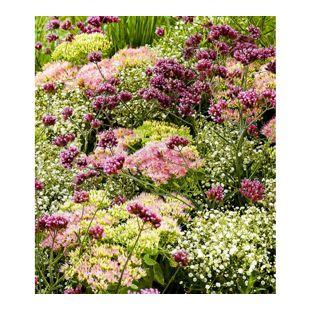 """Stauden-Mix """"Fantasy Garden"""",3 Pflanzen"""