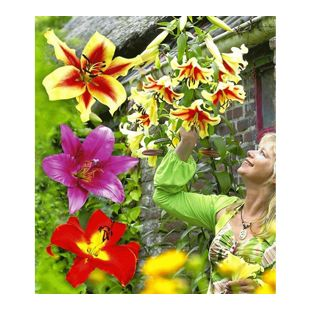 Tree-Lilies®-Kollektion, Baumlilien Mischung, 6 Stück Lilium