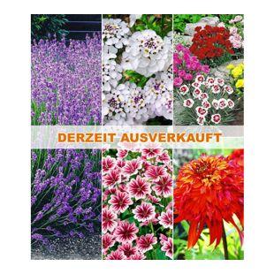 Winterhartes Duft-Staudenbeet,15 Pflanzen