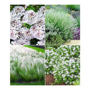 """Winterhartes Staudenbeet """"Eleganz in Weiß"""",12 Pflanzen"""