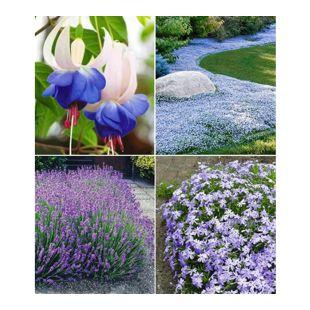 Blauer Stauden-Garten,12 Pflanzen