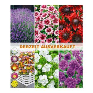 Winterharte Dauerblüher,18 Pflanzen
