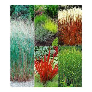 Gräserbeet,9 Pflanzen