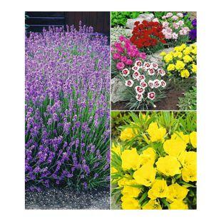 "Winterhartes Staudenbeet ""Bienenweide"",11 Pflanzen"