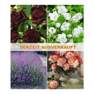 "Winterhartes Gartenbeet ""Rosen & Stauden"",7 Pflanzen"