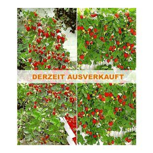 "Erdbeer-Kollektion ""Hummi®"",4 Pflanzen"