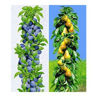 Säulen-Obst-Kollektion Birnen & Zwetschgen, 2 Pflanzen Birnbaum + Zwetschenbaum