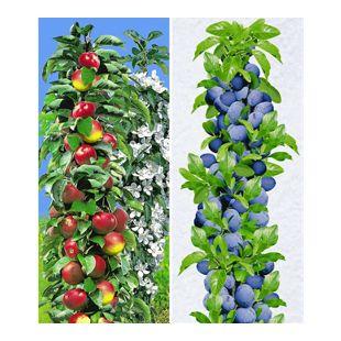 Säulen-Obst-Kollektion Apfel & Zwetschgen, 2 Pflanzen Apfelbaum + Zwetschenbaum