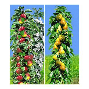Säulen-Obst Kollektion Birnen & Apfel 2 Pflanzen Birnbaum + Apfelbaum Säulenobst