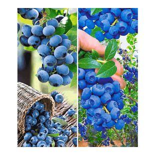 Heidelbeer-Sortiment Trauben-Heidelbeere Reka® und Heidelbeere Hortblue®, 2 Pflanzen