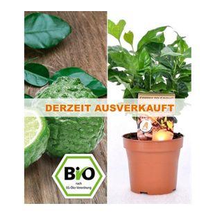 BIO-Echter Kaffee & Kaffir-Limette, 2 Pflanzen