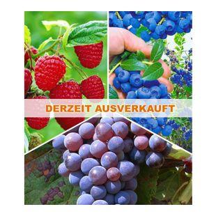 Beeren-Sortiment Traube, Heidelbeere, Himbeere, 3 Pflanzen