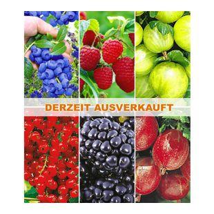 Beerenobst-Kollektion (6 Pflanzen)