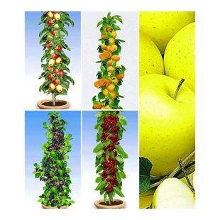 Obst für Balkon & Terrasse (5 Pflanzen)