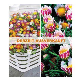 Blühende-Bodendecker-Kollektion,7 Pflanzen