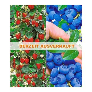 Beeren-Kollektion,4 Pflanzen