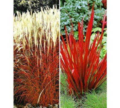 Winterharte Gräser Garten niedrige gräser kaufen gartenxxl de