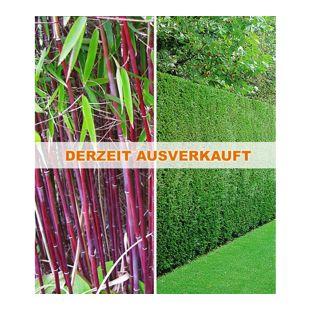 Hecken-Kollektion,3 Pflanzen