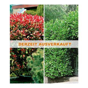 Immergrüne Hecken-Kollektion,2 Pflanzen