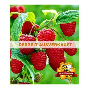 Himbeeren TwoTimer® Sugana® , 1 Pflanze, Rubus idaeus