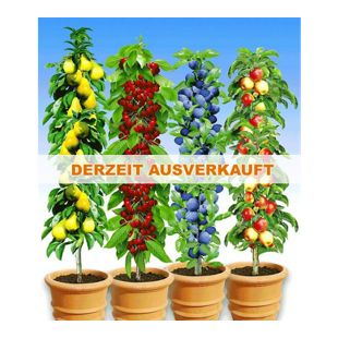 Säulen-Obst-Kollektion Birne, Kirsche, Pflaume & Apfel, 4 Pflanzen