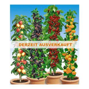 Säulen-Obst-Raritäten-Kollektion Apfel, Brombeere, Kirsche + Aprikose, 4 Pflanzen Obstbäume