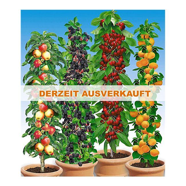 Beliebt Bevorzugt Säulenobst - reiche Ernte von schlanken Bäumen - GartenXXL Ratgeber @UF_66