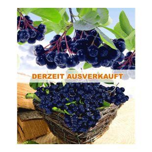 Vitaminbeere Apfelbeere 'Aronia Viking', 1 Pflanze Aronia melanocarpa