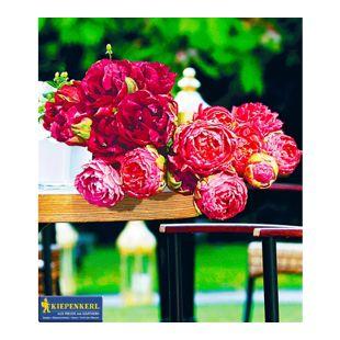 Gefüllte Tulpen Rosentulpen-Raritäten, 10 Zwiebeln