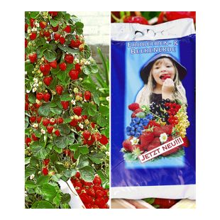 Kletter-Erdbeere® 'Hummi®' & Spezial-Erdbeer- & Beeren-Erde 15 Liter,1 Set