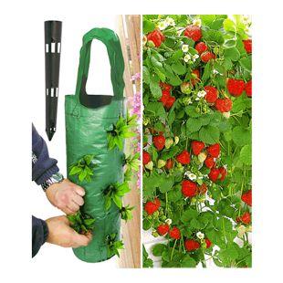 Hänge-Erdbeere® 'Hummi®' 3 Pflanzen & Pflanzbeutel 'Kaskade' & Gießtrichter,1 Set