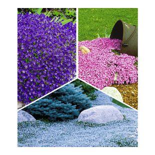 Teppichphlox 'Emerald Pink' & Blaukissen 'Cascade Blue' & Isotoma 'Blue Foot'®;1 Set (je 3 Pflanzen)
